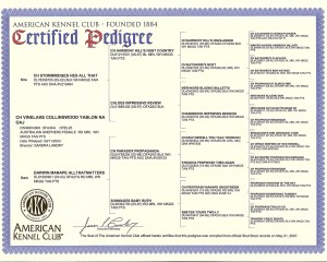 deuce_pedigree_cert