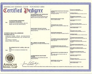 razz_pedigree_cert