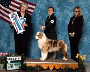 """Ember"" GCH Collinswood Sparks Fly Wizard x Deuce"